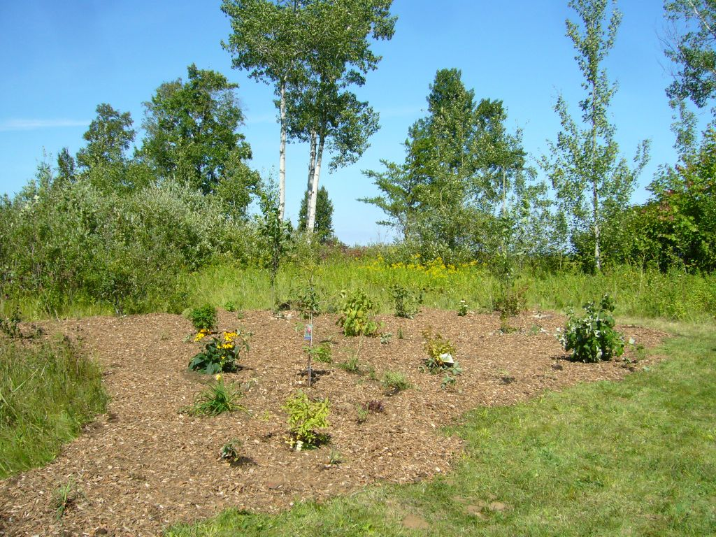 edible forest garden, food forest, polyculture, Nishnawbe Aski Nation, First Nations, cold climate
