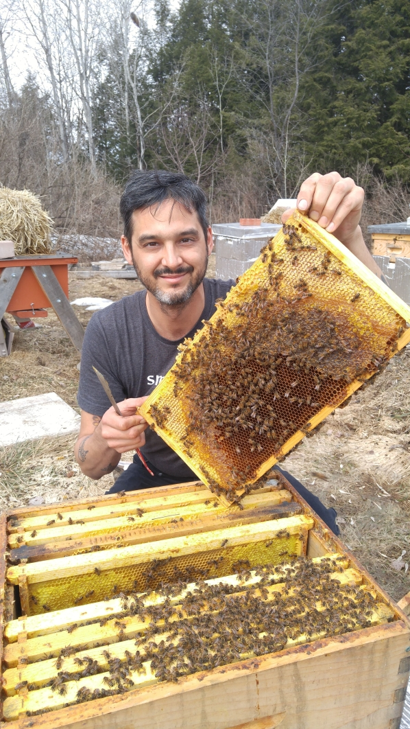 Radical Homestead bees