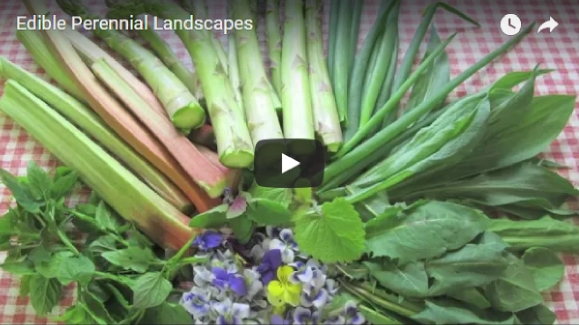 Edible Perennial Landscape video