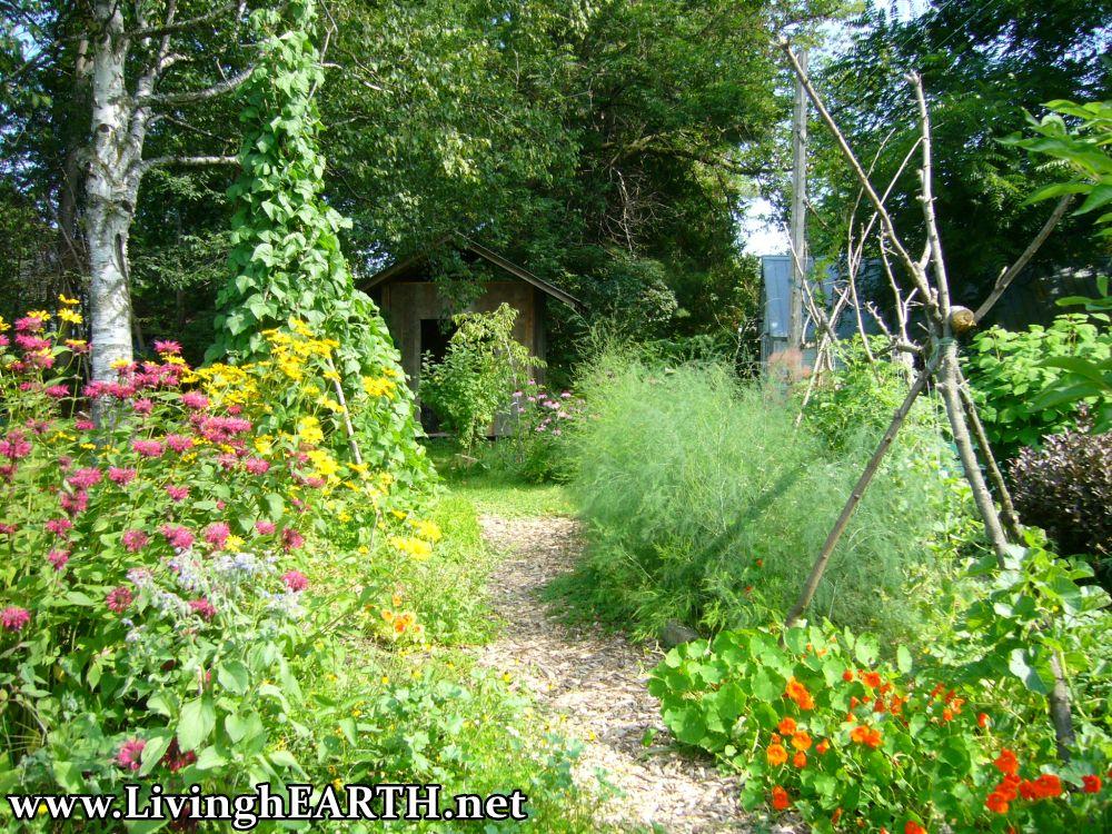 permaculture garden in summer