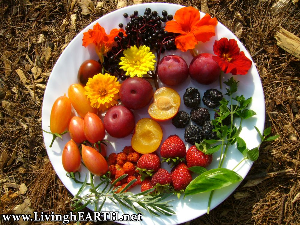 edible forest garden harvest, fruits and medicine