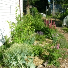 our zone 1 polyculture